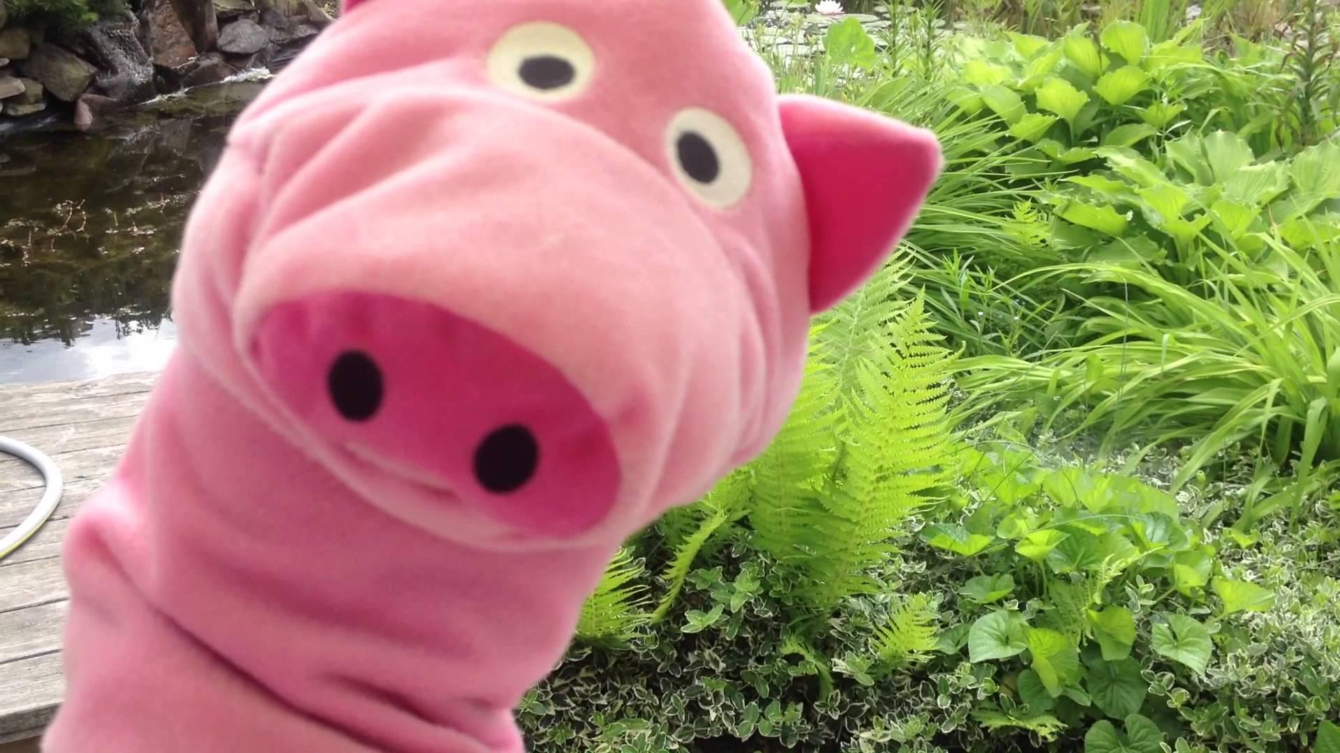 Świnia czyta na Dzień Dziecka!