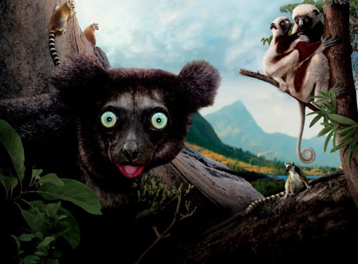 Lemury zMadagaskaru 3D – vlog oImax + recenzja