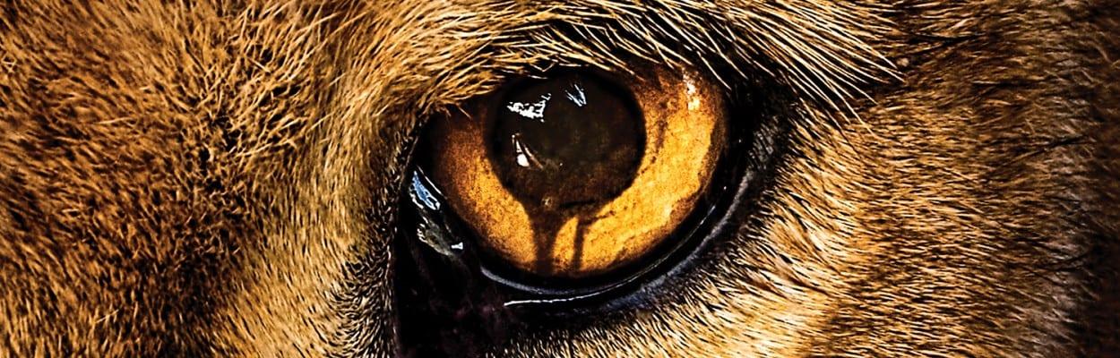 Zoo – trzy pierwsze odcinki